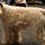 5 Small dog breeds that will fit right in with your family