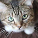 Cat training guidebooks that every cat lover should invest in