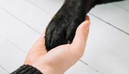 The best dog training guides to help you help your dog understand you