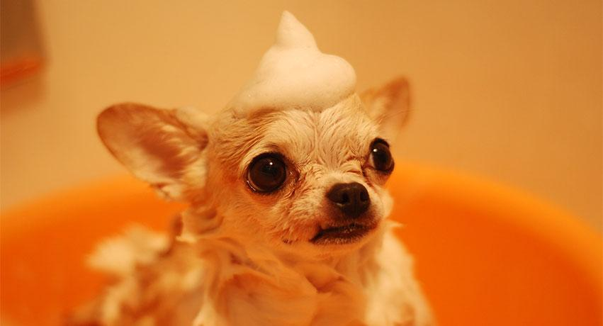 gr - Top Dog grooming tips and advice to help dog owners keep their pets healthy