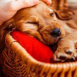How pet adoption works in America, the rules, regulations and some handy advice