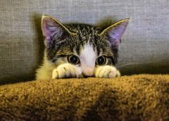 Your checklist for getting ready to adopt a cat