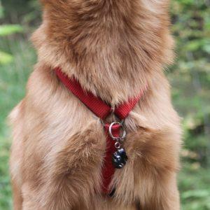 emf dog pendant 300x300 - 3 Ways to Protect Your Pets from EMF Radiation