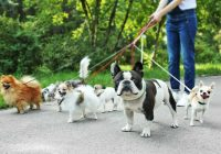 Choosing the Best Walking Shoes for Dog Walkers