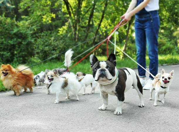 walking shoes for dog walking - Choosing the Best Walking Shoes for Dog Walkers